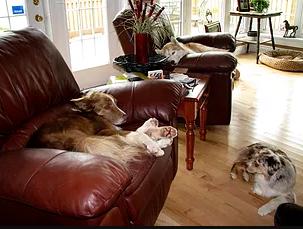 NB Riverside Dogs - Sleep Over