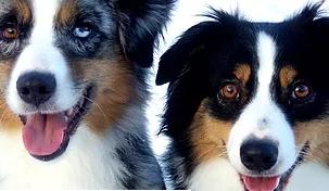 NB Riverside Dogs - Double Trouble